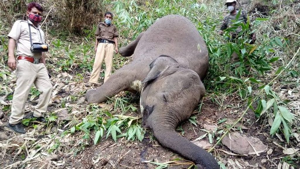 Hallan al menos 18 elefantes muertos por el impacto de un rayo en un bosque de India