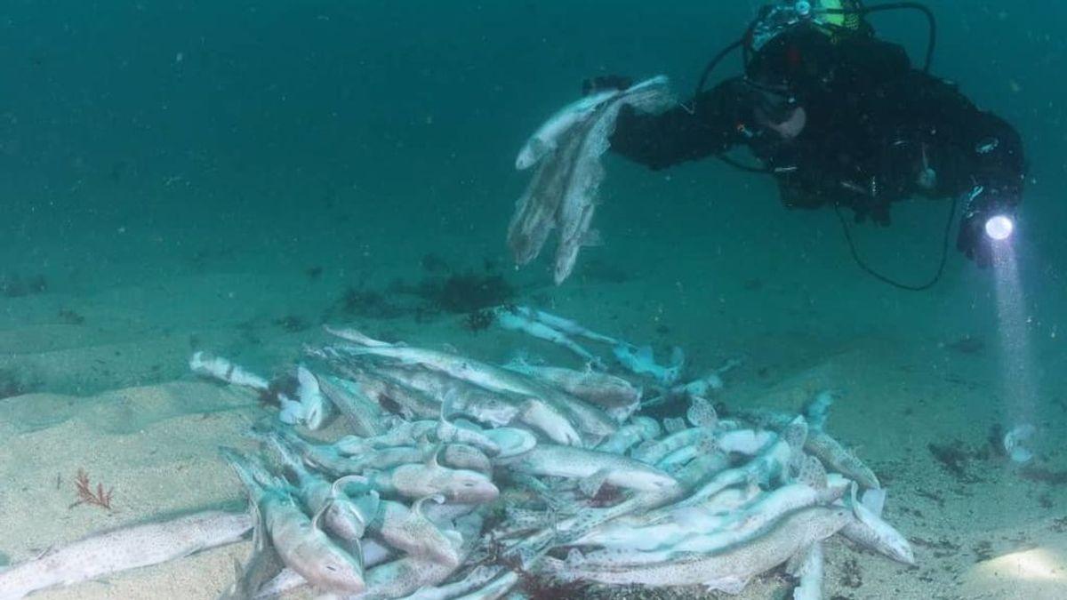 """Indignación por la """"masacre"""" de cientos de crías de tiburón descubierta en Guipúzcoa"""