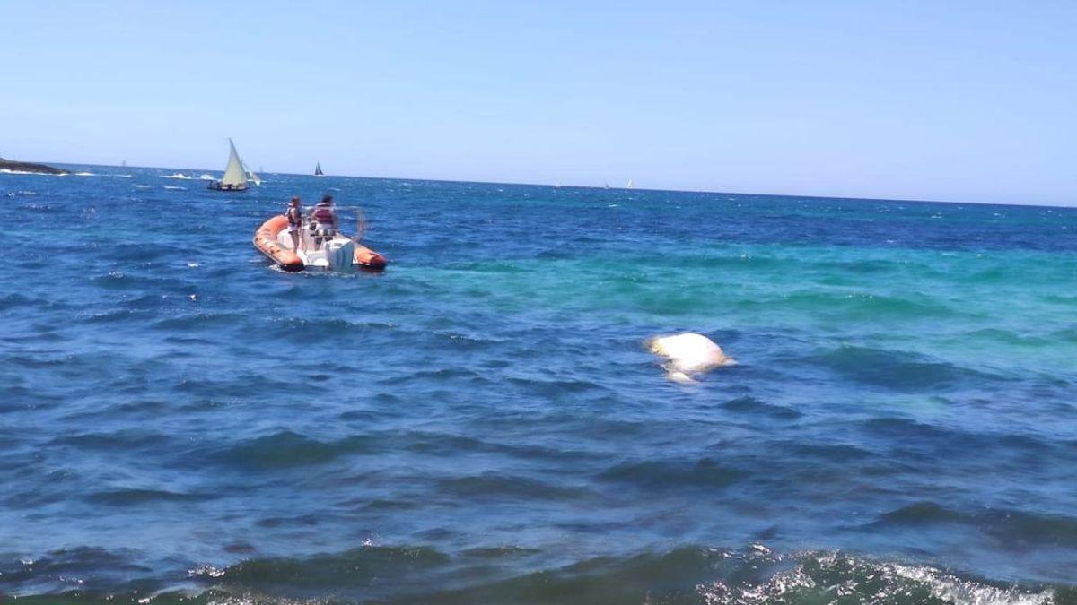 Aparece el cadáver de un cachalote en aguas de Mallorca