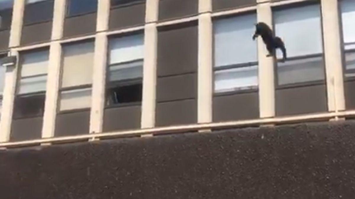Un gato salta desde un quinto piso que estaba quemándose y sobrevive