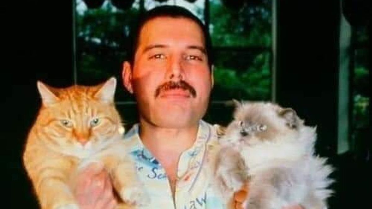 No solo Freddie Mercury los amaba: otros famosos locos por los gatos