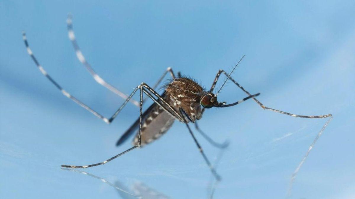 """Alertan del incremento de los mosquitos tigre este verano: """"Lluvias y temperaturas están creando el cóctel perfecto"""""""