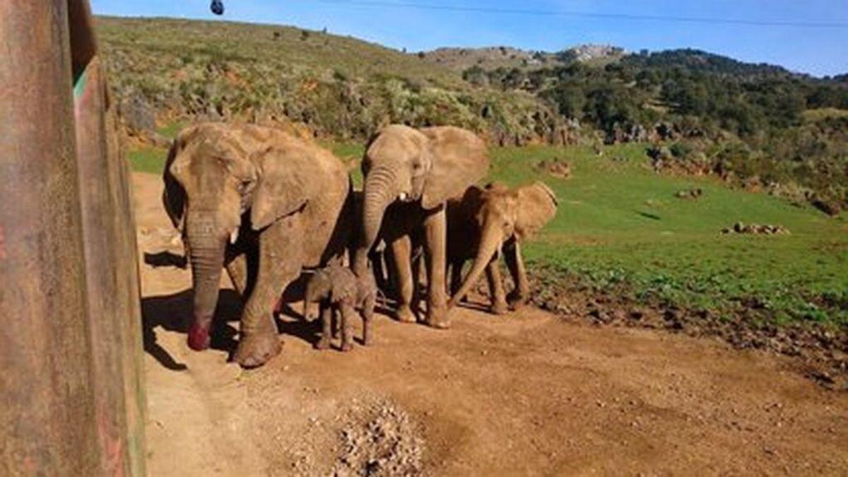 Cabárceno elefantes