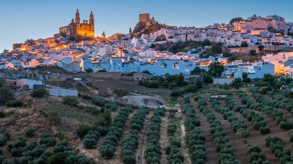 Campos de olivos en Olvera