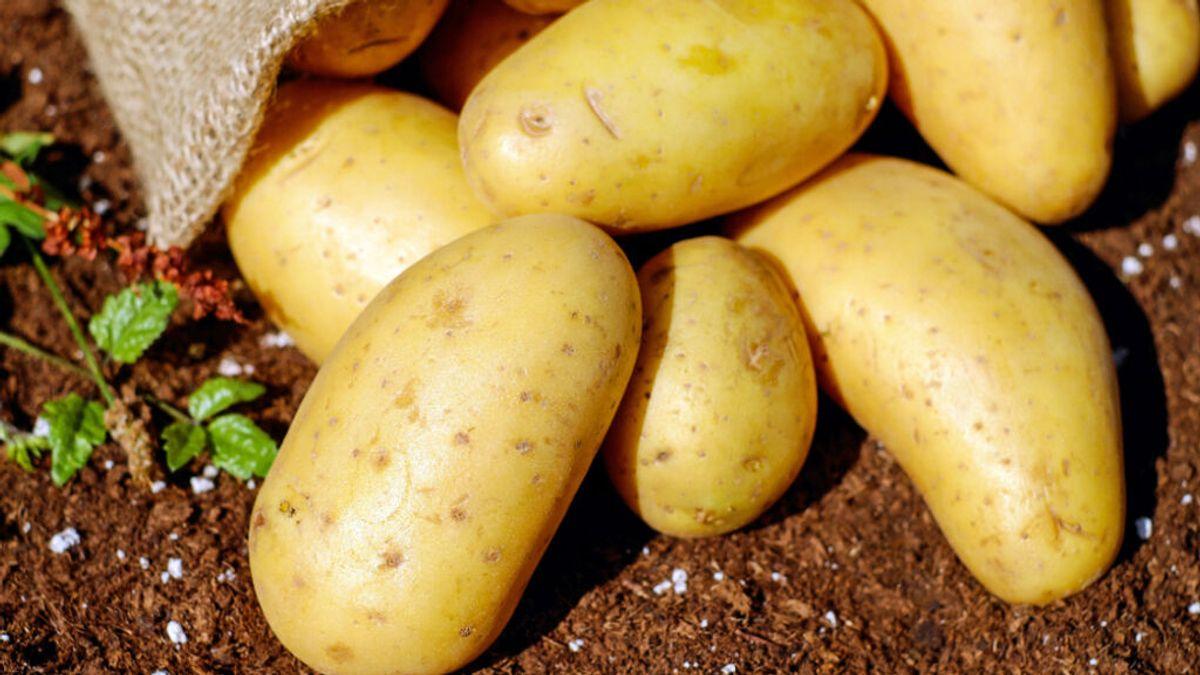 Tacna, la mejor candidata a 'patata marciana' para cultivar en el planeta rojo