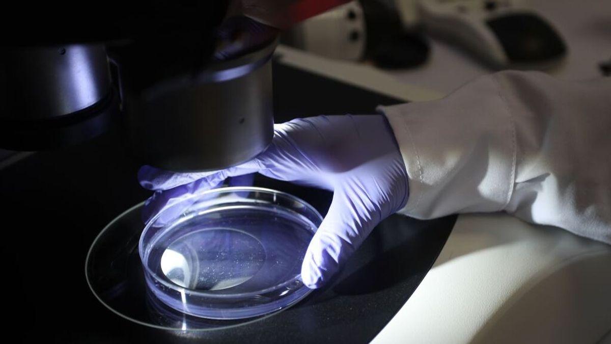 Dos estudios advierten sobre dos nuevos coronavirus capaces de infectar a los humanos