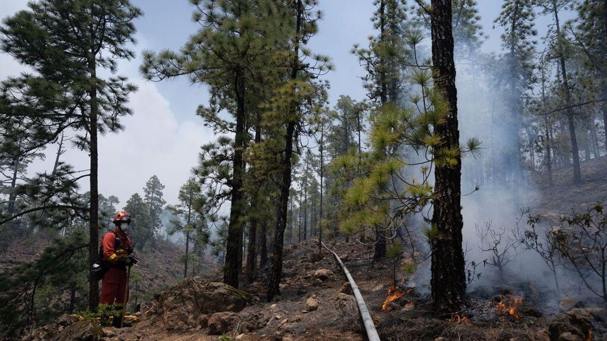 El incendio de Arico (Tenerife) queda controlado según el Gobierno de Canarias