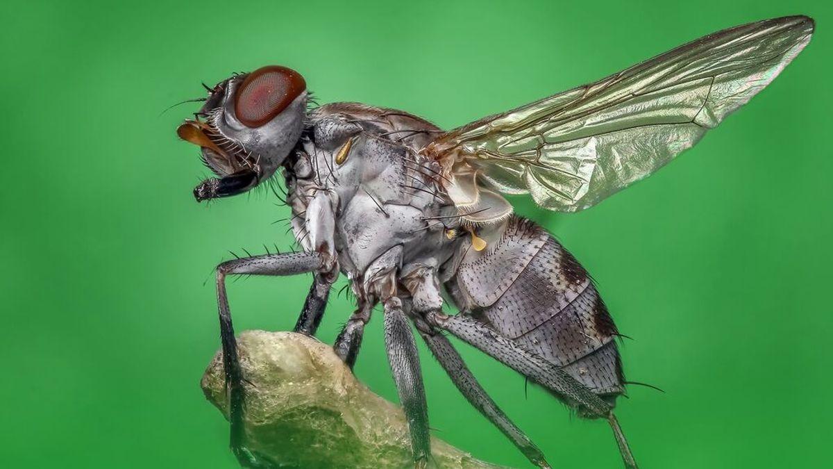¿Por qué siempre se nos escapan las moscas?