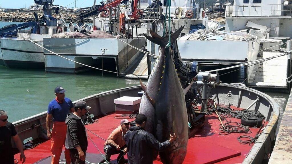 Descarga de atunes