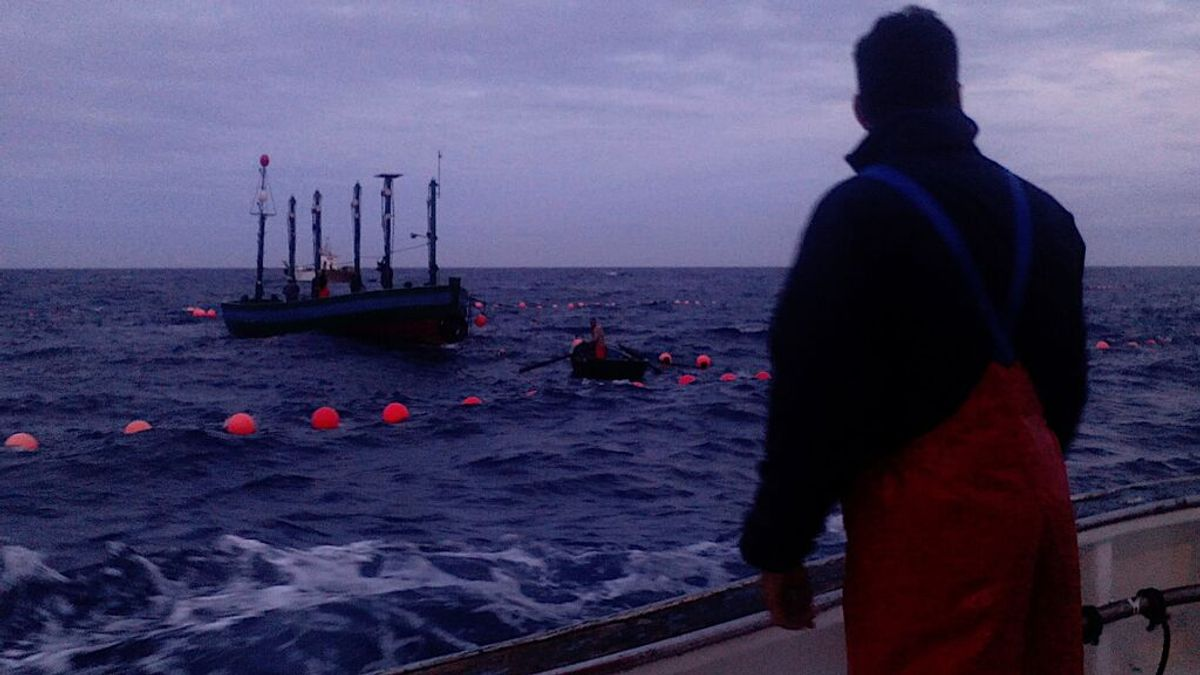 La almadraba se vacuna: la inmunización llega a los pescadores andaluces