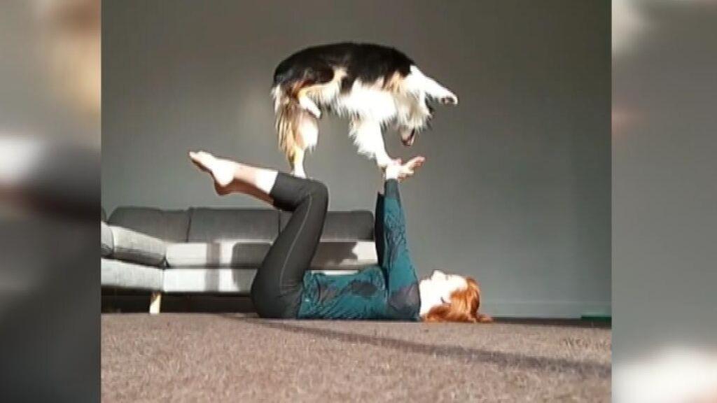 'Secret', la polifacética perra que arrasa haciendo yoga en Instagram