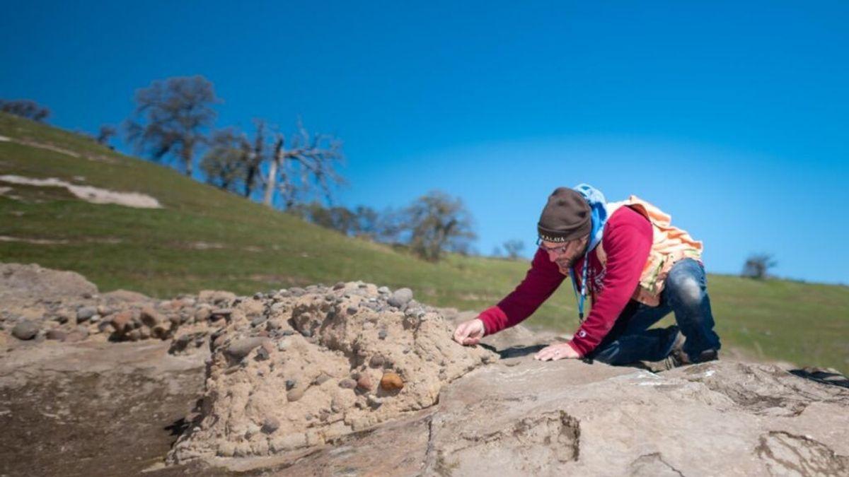 Encuentra por accidente cientos de fósiles de millones de años, entre ellos los de un mastodonte