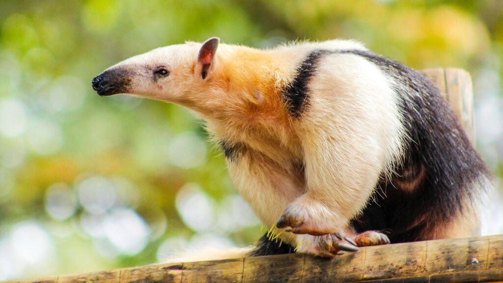 La carretera mortal para la fauna salvaje de Brasil que causa 3.000 atropellos al año