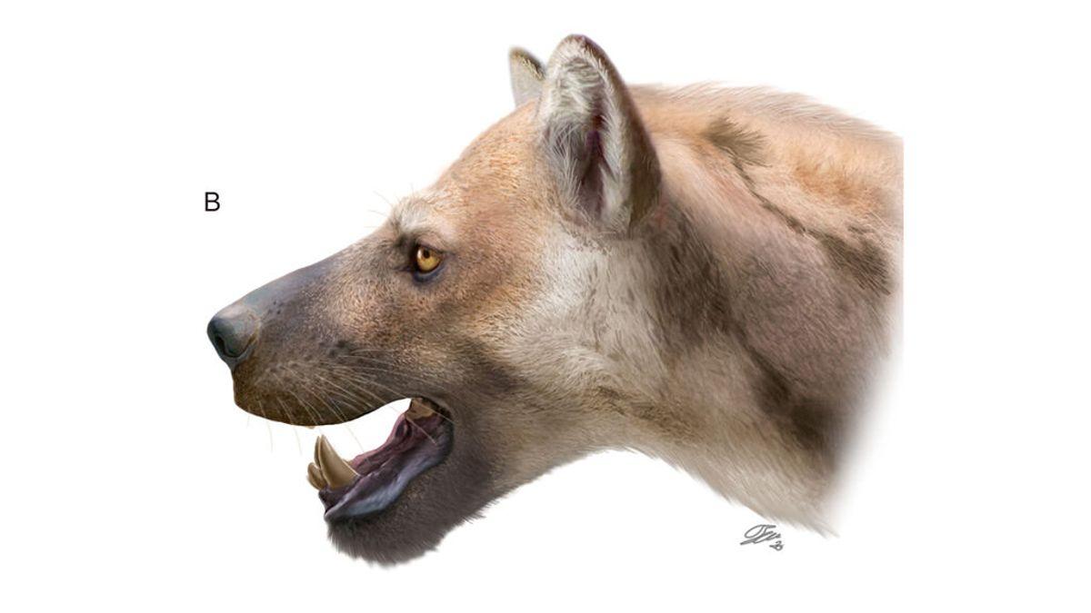 Identifican una nueva especie de 'perro-oso' que habitó la Península hace millones de años