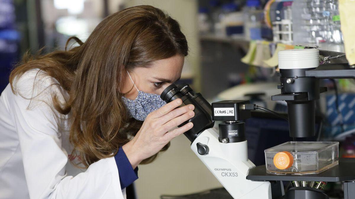 Un estudio encuentra similitudes entre el cerebro humano y los testículos