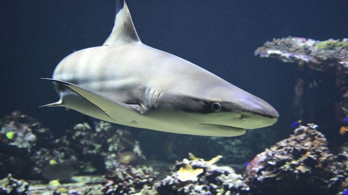 Cómo rastrear tiburones