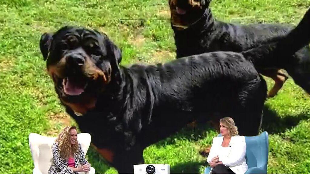 Los perros de Rocío Carrasco avisaron a Fidel Albiac cuando intentó quitarse la vida en 2019