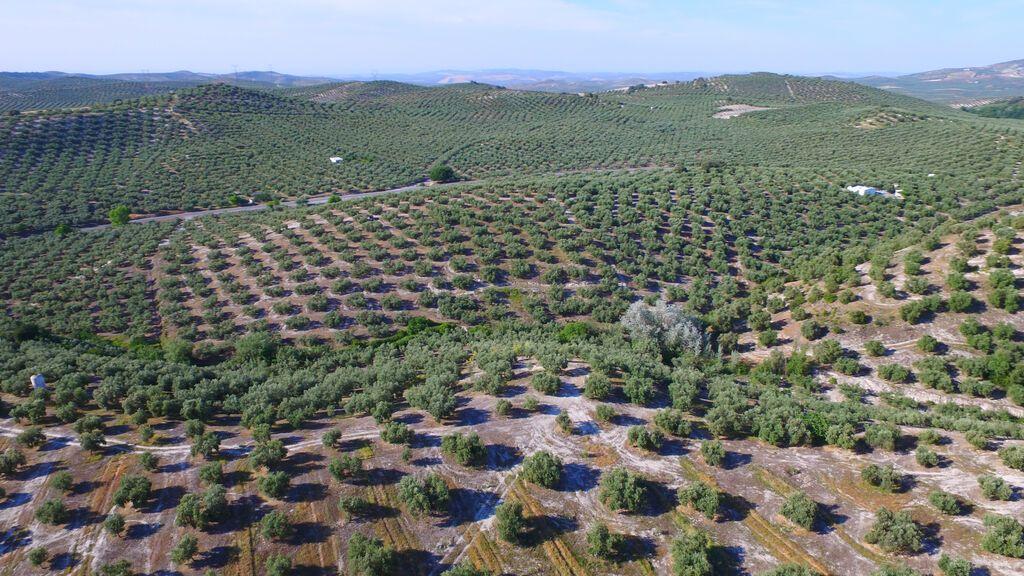 Esta primavera, escápate a un bosque lleno de vida:  nuestro olivar