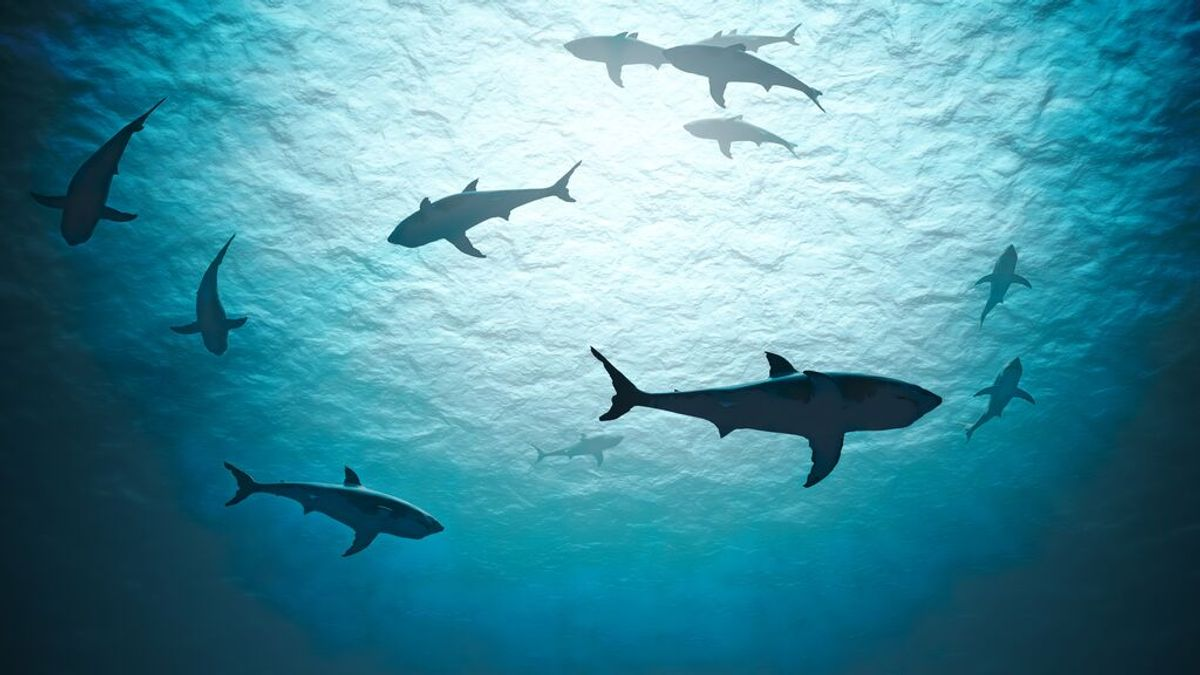Un evento misterioso mató hace 19 millones de años al 90 % de los tiburones