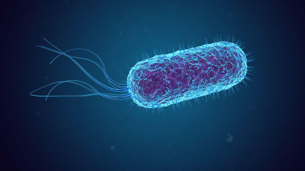 La bacteria indestructible que puede revolucionar la industria de la biología sintética