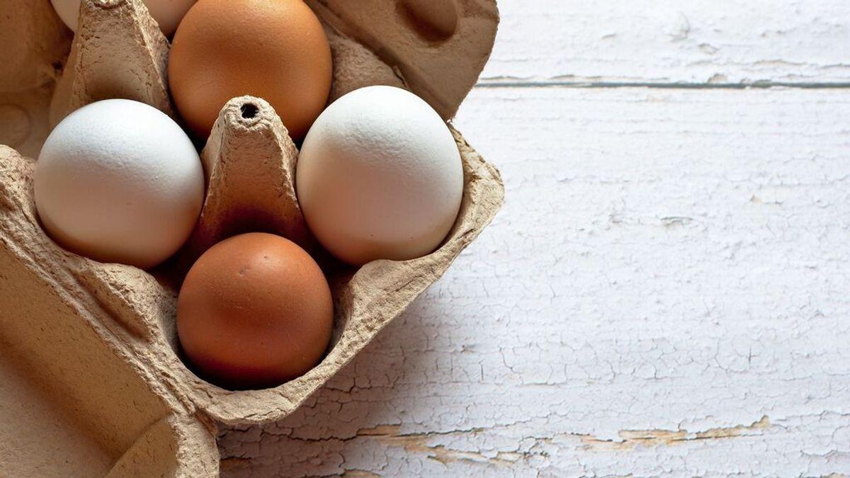 Cuál es la diferencia entre huevos blancos y marrones