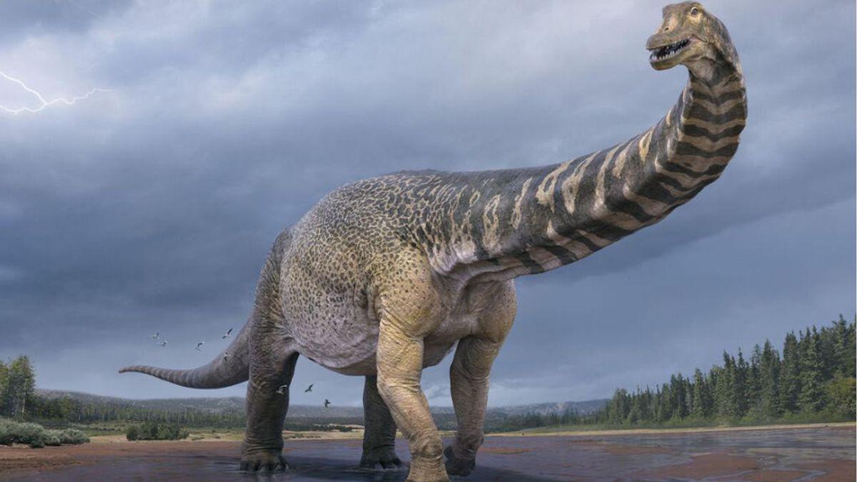 Descubren los restos de 'Cooper', el dinosaurio más grande de Australia