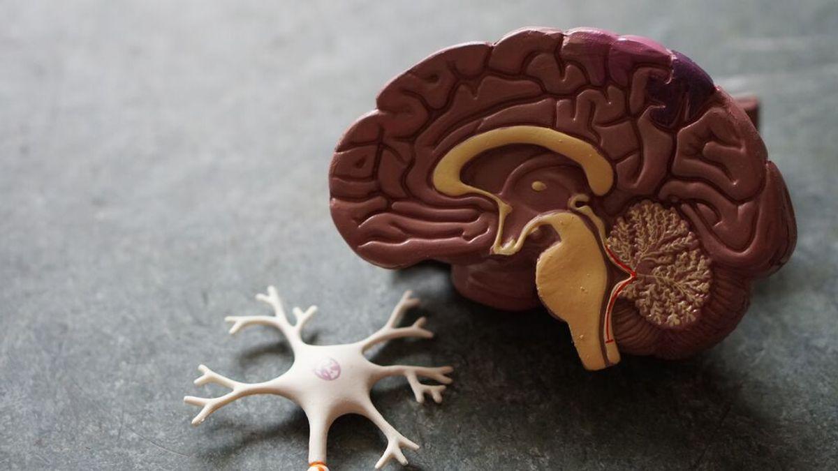 Impulso al diagnóstico precoz del alzhéimer: se puede saber si hay riesgo de demencia por los genes