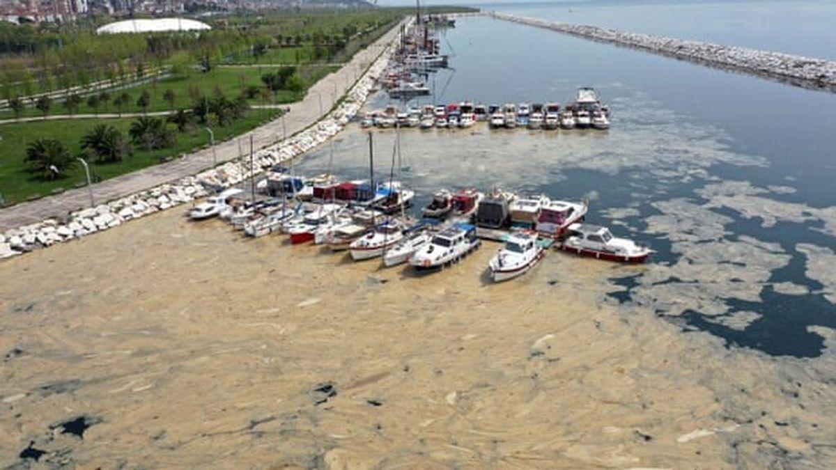 Turquía, en alerta por el 'moco marino': ¿qué es el mucílago que está blanqueando la costa de Estambul?