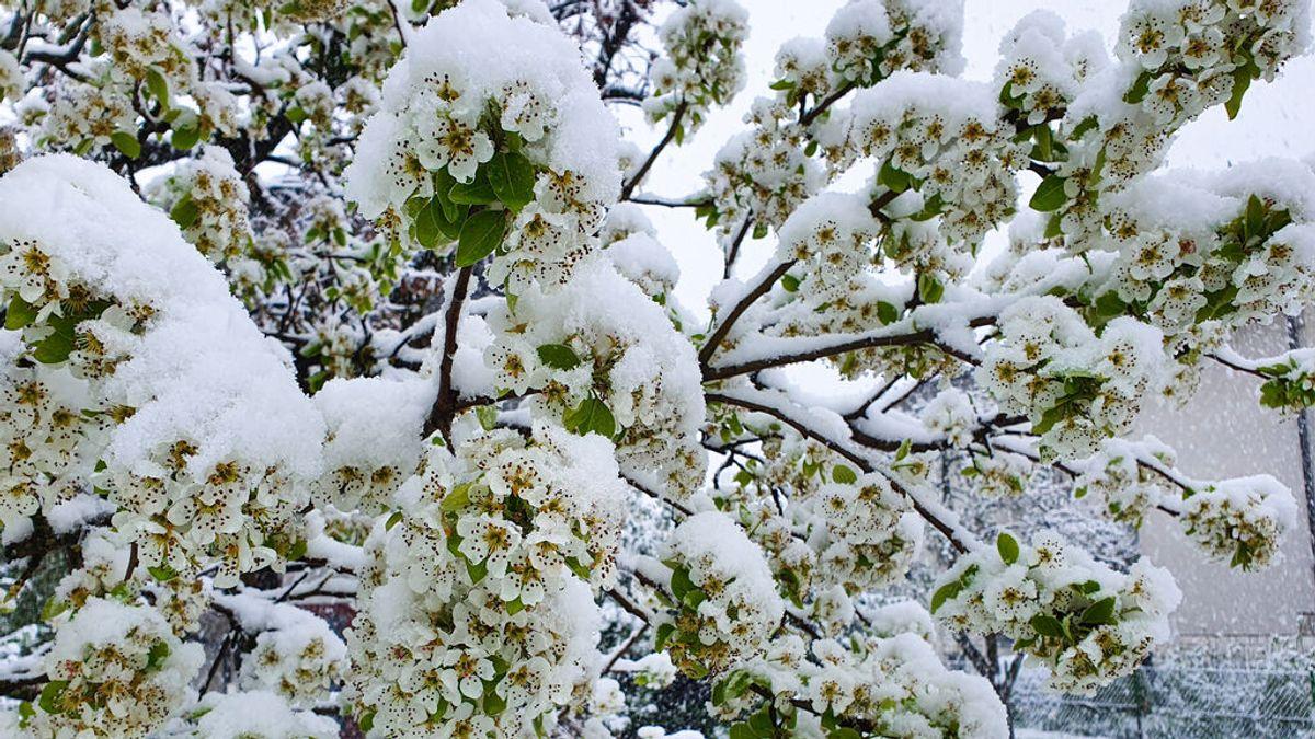 La primavera de 2021 ha sido la más fría en Europa desde 2013