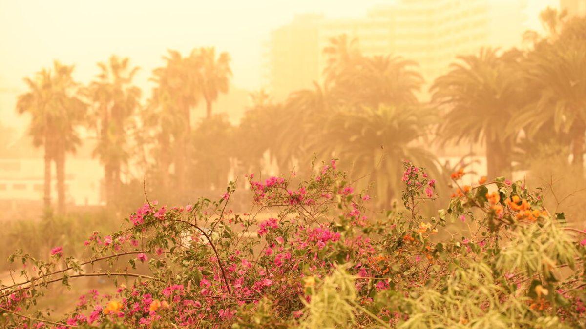 El flujo subtropical arrastra a Canarias una masa de aire tórrida, seca y cargada de polvo