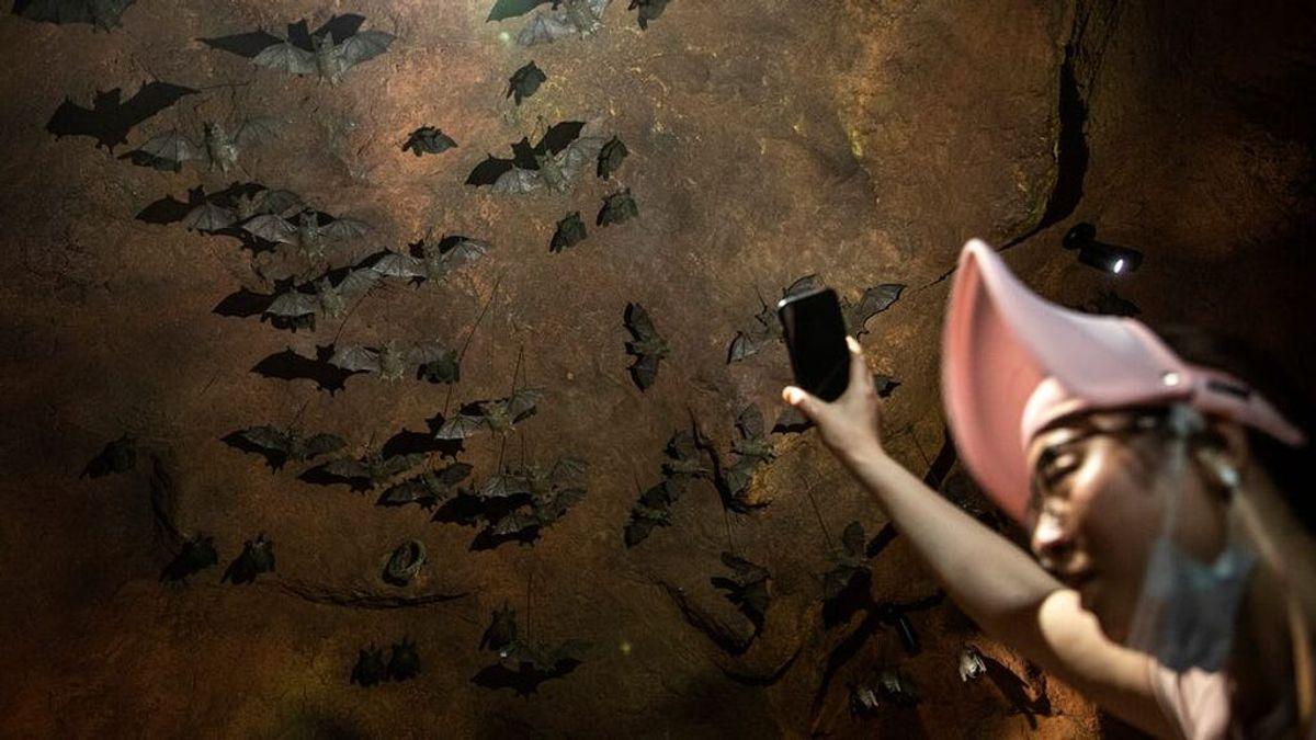 Un video muestra a científicos de Wuhan recolectando muestras en cuevas de murciélagos