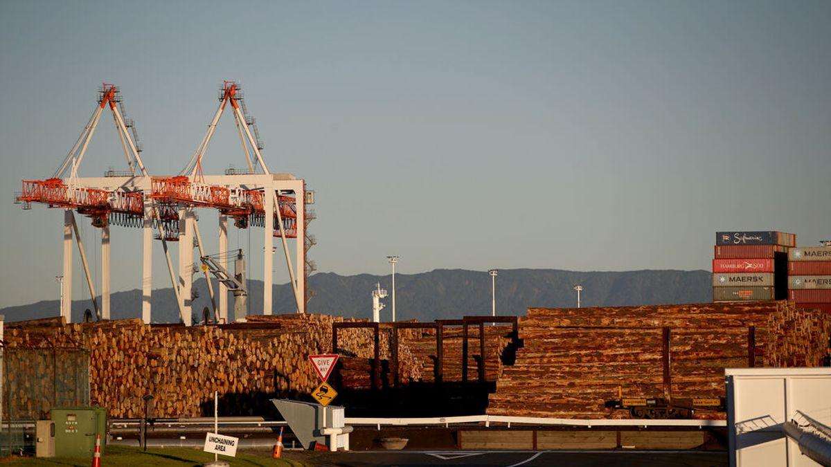Exportación de Madera en Nueva Zelanda