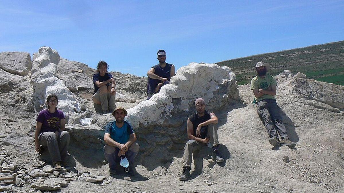 Recuperada una columna vertebral de un dinosaurio gigante en Teruel