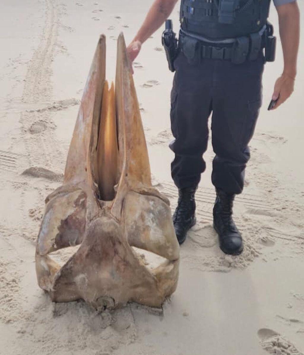 Una tormenta arrastra un misterioso cráneo a una playa de EEUUy y dispara las especulaciones