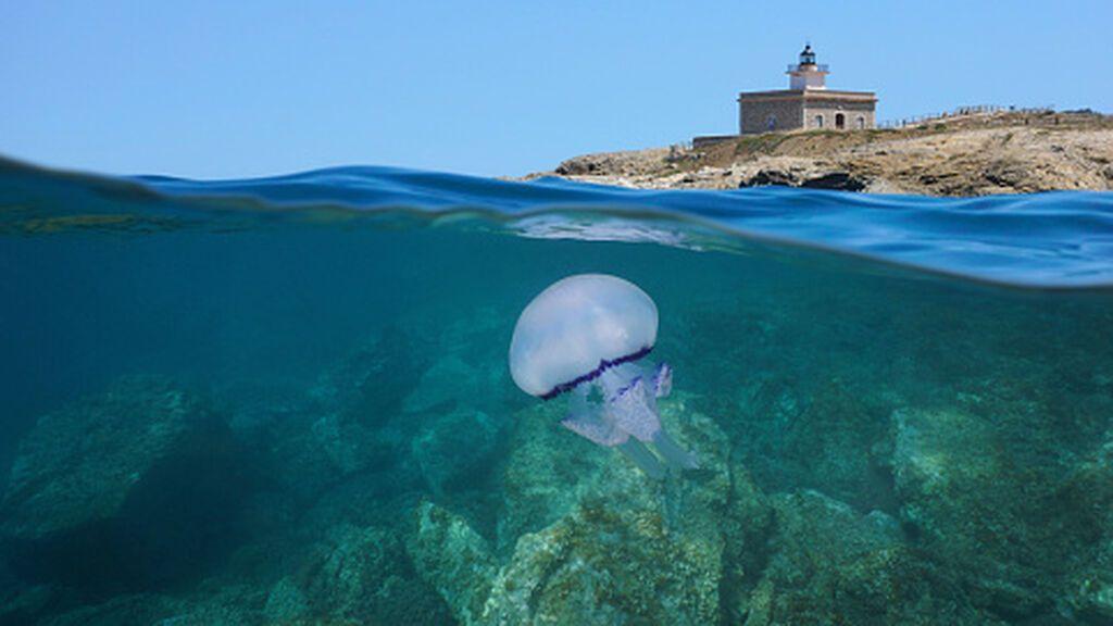 Habrá más medusas en las playas españolas tras un invierno y una primavera cálidos