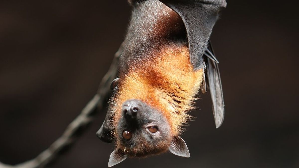China dice haber encontrado 24 tipos de coronavirus desconocidos en murciélagos