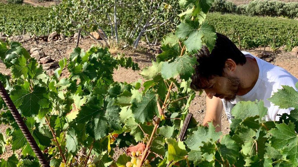 David Silva en el viñedo