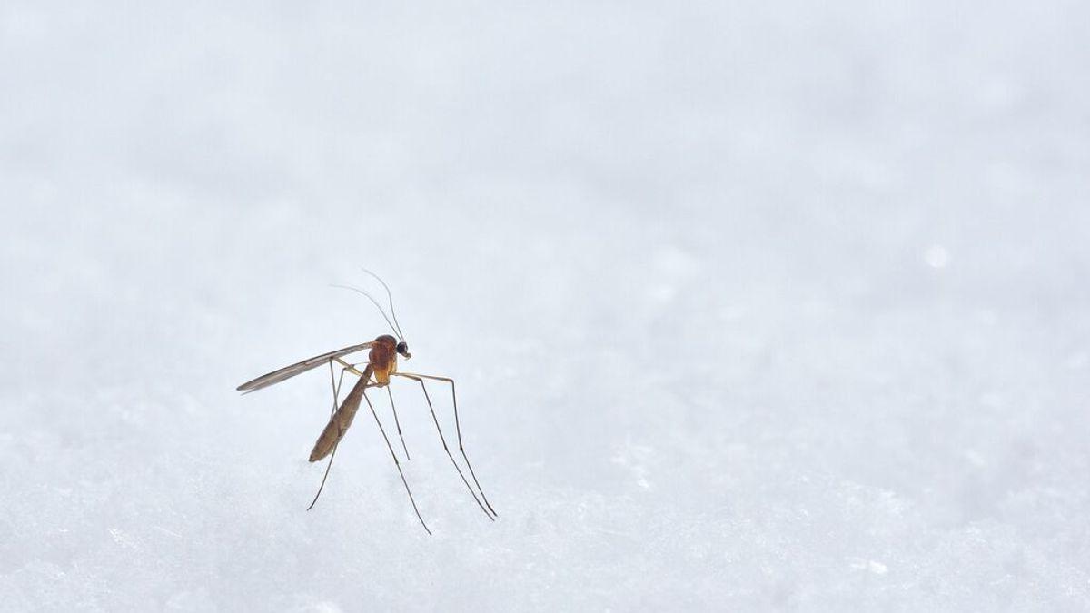 Llega el calorcito y los mosquitos: ¿cómo identificar las pulseras repelentes que sí son eficaces?