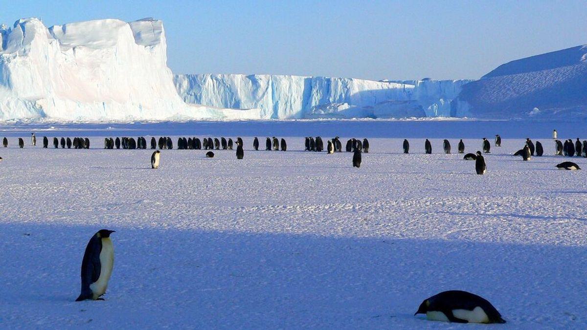 Los maoríes descubrieron la Antártida antes que los occidentales, según un estudio neozelandés