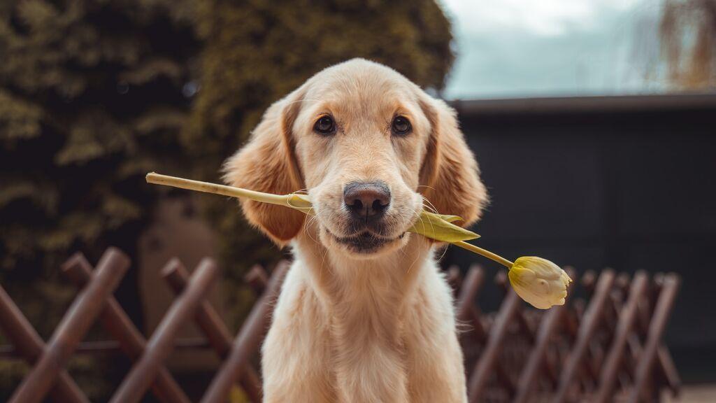 Mascotas y economía familiar. ¿Cuánto cuesta al año tener un perro o un gato?