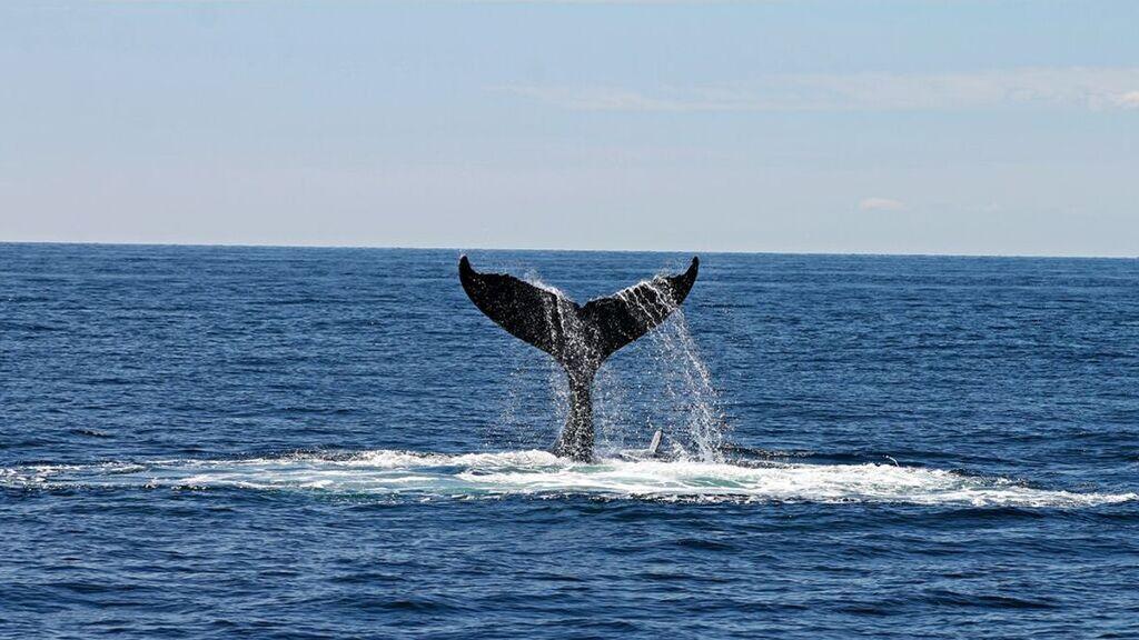 Ha pasado en la vida real: la odisea de un hombre que salió a pescar, se lo tragó una ballena y vivió para contarlo
