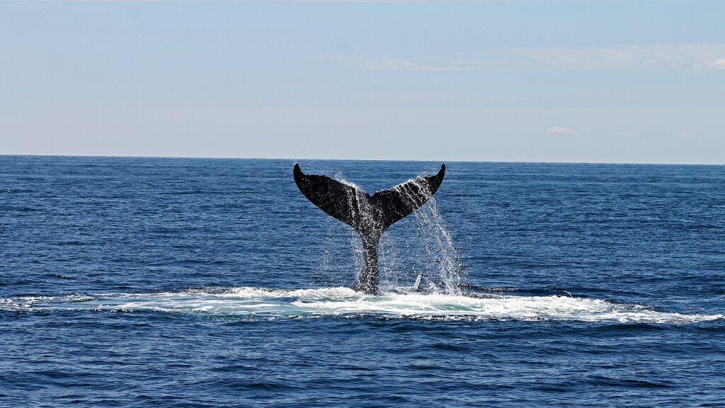 """La odisea de un buzo que sale a pescar, se lo traga una ballena y lo escupe segundos después: """"Estoy vivo para contarlo"""""""