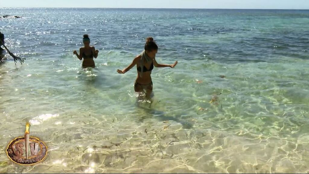 Lola y Palito se topan con un banco de medusas
