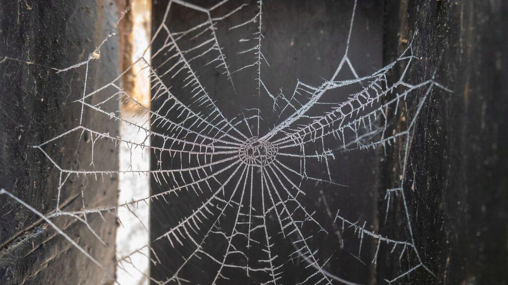 ¿Es este el plástico del futuro? Crean un material que imita la resistente seda de araña