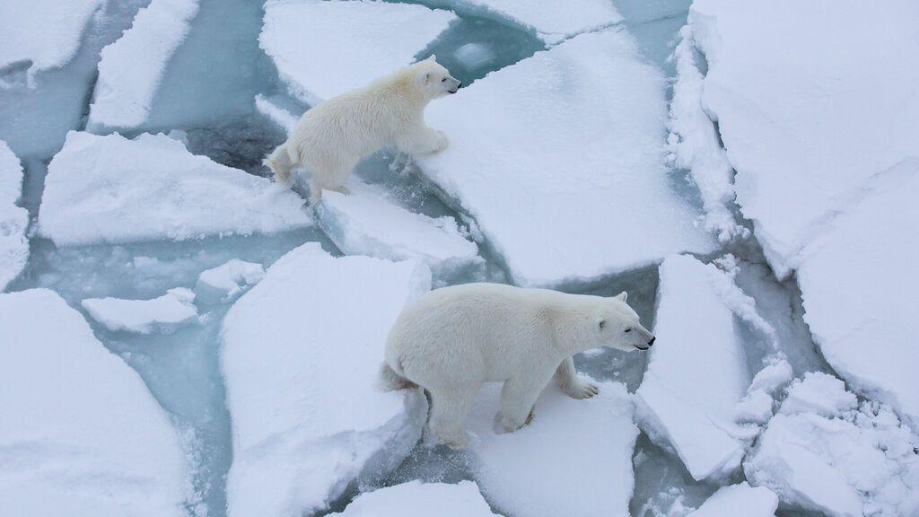 El hielo marino del Ártico retrocede el doble de rápido de lo que se pensaba
