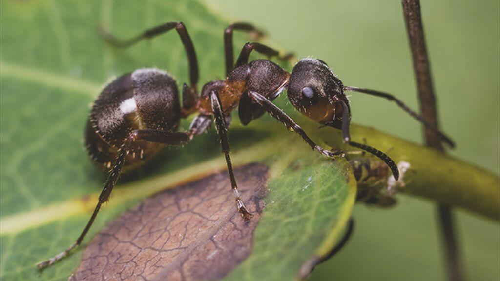Para deshacerte de las hormigas podrás plantar alguna planta aromática.