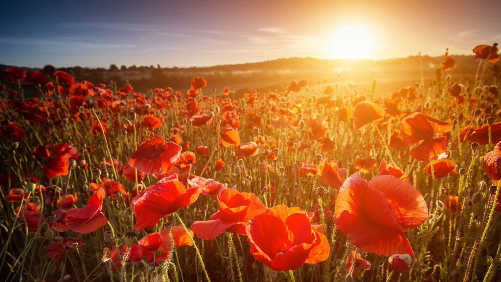 Solsticio de verano: qué es y cuándo se producirá este año