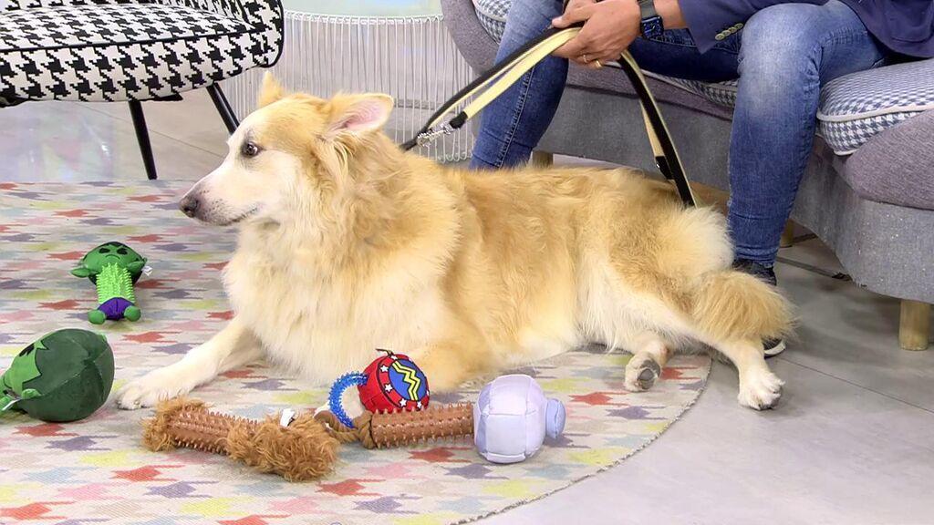 Duque y Nube, dos perros que necesitan ayuda para encontrar un nuevo hogar y recuperarse