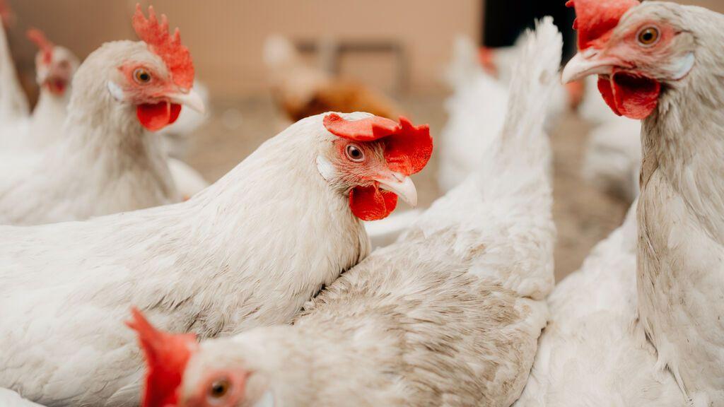 Un rayo mata 10.000 gallinas al provocar un incendio en una granja de Titaguas (Valencia)