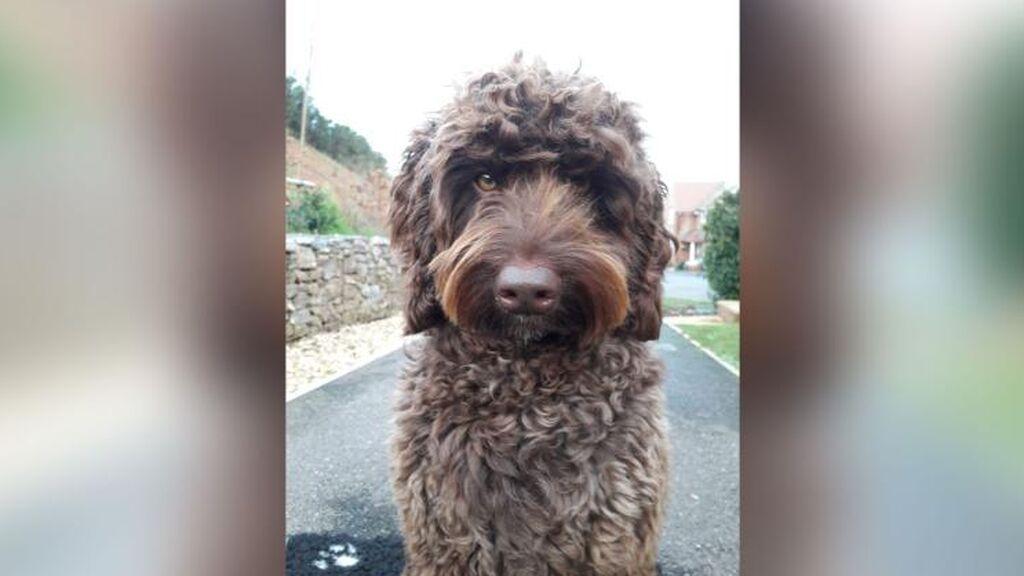 Digby, el perro de terapia que ha salvado a una mujer que estaba a punto de quitarse la vida